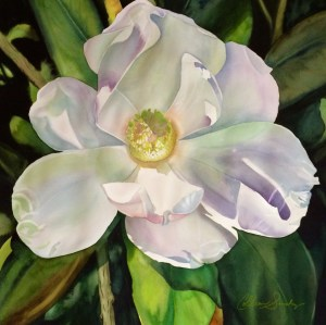 Colleen Sanchez original watercolor painting White Magnolia 22 x 22 unframed