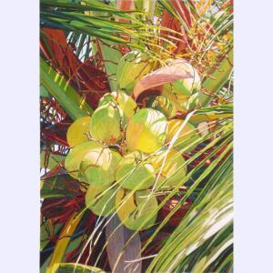 Fabienne Blanc original watercolor Coconut Palm, Lanikai © 41 x 29.5