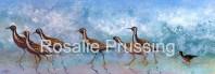 Rosalie Prussing Plovers Visiting Hawaii
