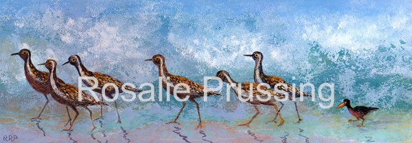 Rosalie Prussing Plovers Visiting Hawaii