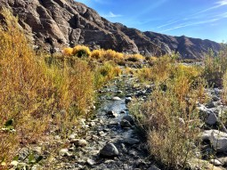 whitewater-preserve-1217 (1)