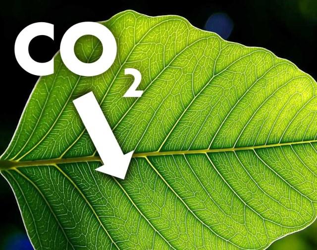 Leaf_CO2