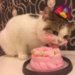 ケーキにむさぼりつくニャンコの姿がおもしろカワイイ!
