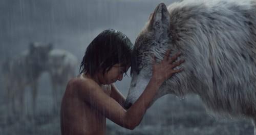 FAVREAU-wolf