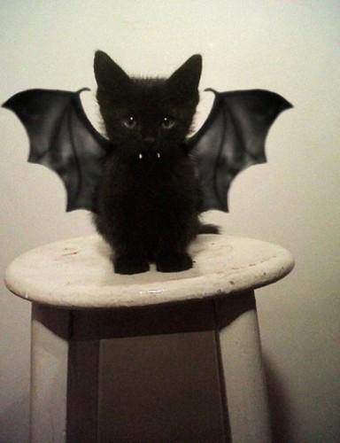 halloween-cat-costumes-19-57f75fe01d15b__605