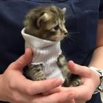 ハリケーン「マシュー」から救出された子猫—靴下のセーターを着て新しい家族と出会う