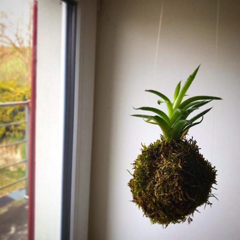 Plante, mousse, mlam, noiram, création organique, plumes, kokedama