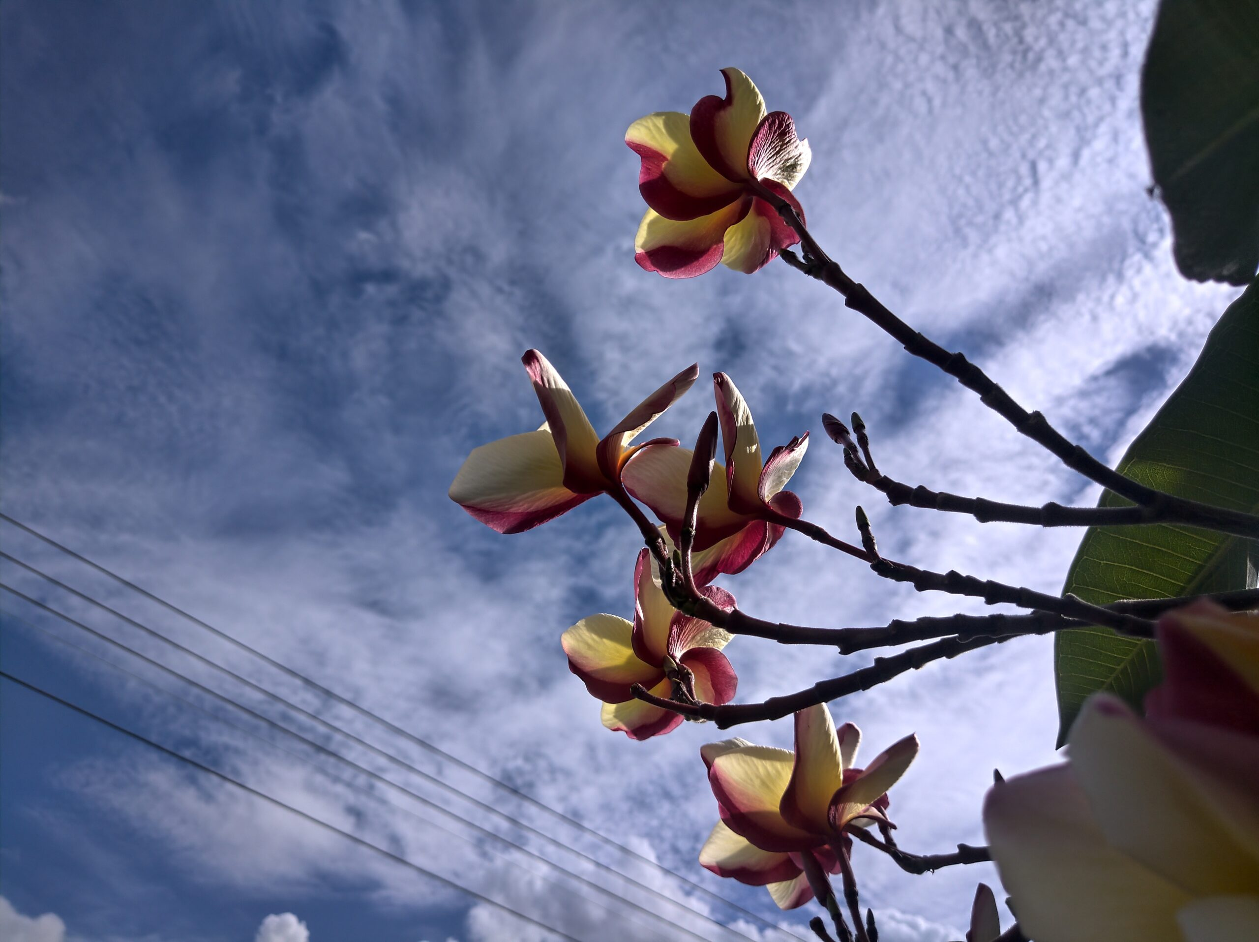 A picture containing sky, plant, several Description automatically generated