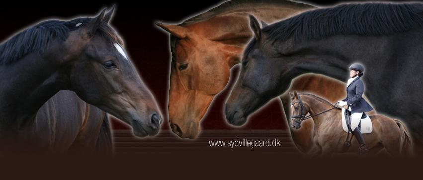 sydvillegaard.dk facebook cover