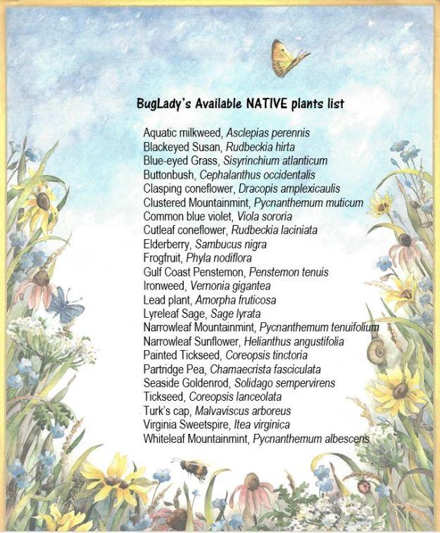BugLady's Available NATIVE Plants