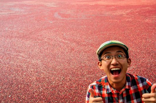 Cranberry bog in Plymouth