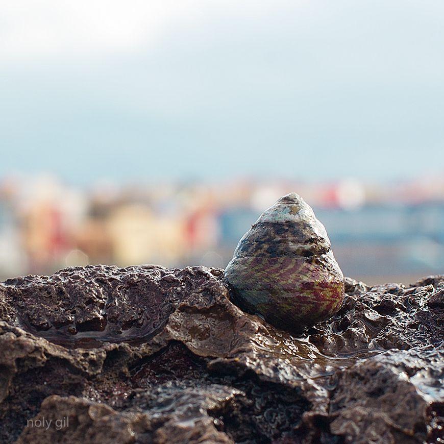 junio burgao en las rocas de la playa del burrero