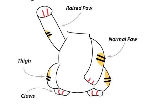 Học cách móc mẫu mèo thần tài