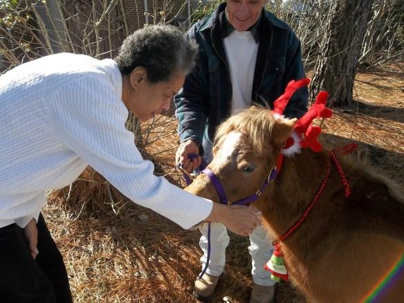 Diane meets a horse.