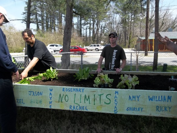 Brandon, Zel, and David working on the lettuce plants.  Stay tuned as well for more updates on our spring garden here at No Limits!!