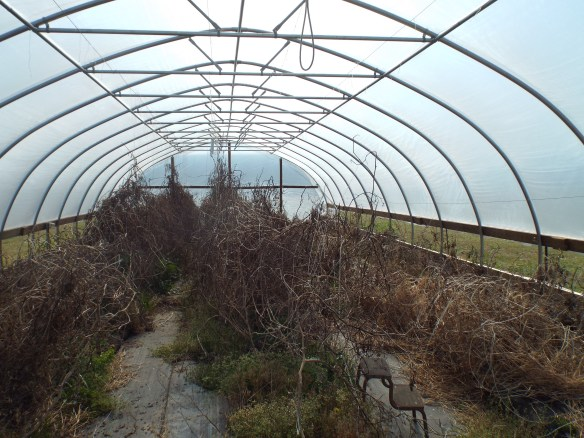 Our main goal for the day was getting the hoop house cleaned up.