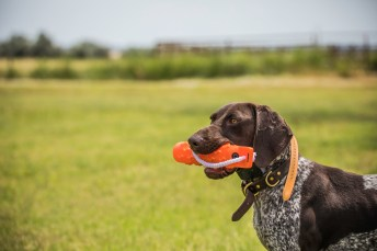 NO_LIMITS_KENNELS_2017_7_27 (187 of 215)