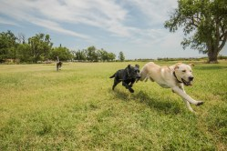 NO_LIMITS_KENNELS_2017_7_27 (206 of 215)