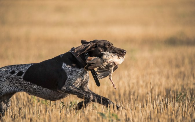 NO_LIMITS_KENNELS_2017_7_27 (70 of 215)