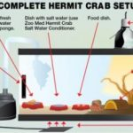 How to Care for Hermit Crabs?