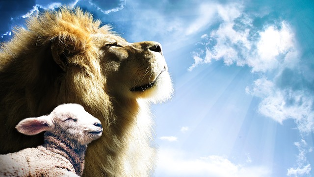 """A lion and lamb basking in the sun represents the argument that the Mandela Effect changed the Bible from """"lion will lie down with the lamb"""" to """"wolf will lie down with the lamb."""""""
