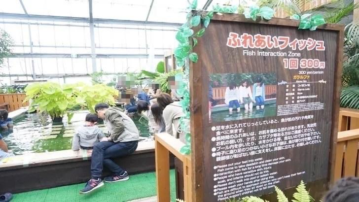 兵庫県神戸市にある神戸どうぶつ王国(魚とのふれあいコーナー)