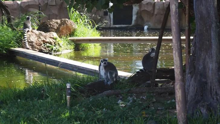 ハワイ・オアフ島にあるホノルル動物園(小猿)