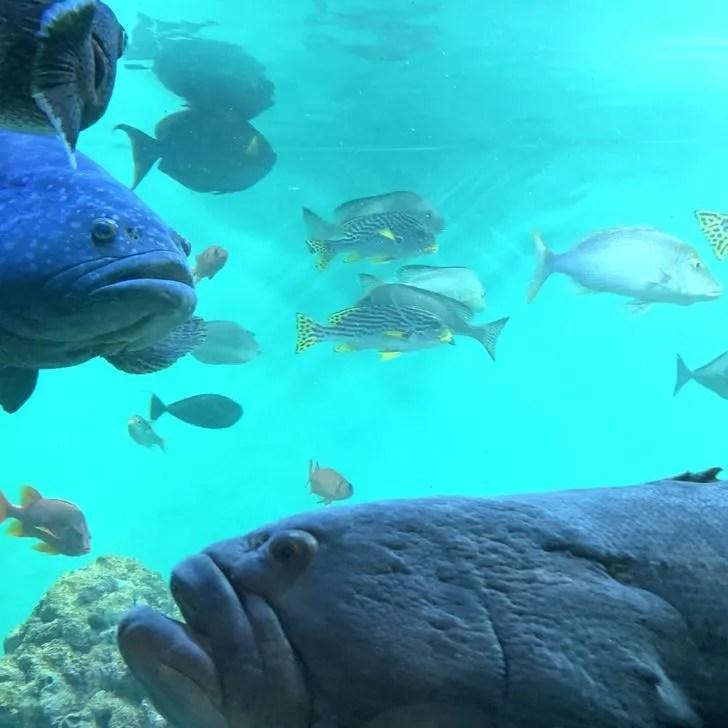 葛西臨海水族園の入り口付近にいる魚