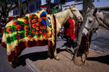 Horses at the Pase del Niño parade in Cuenca, Ecuador