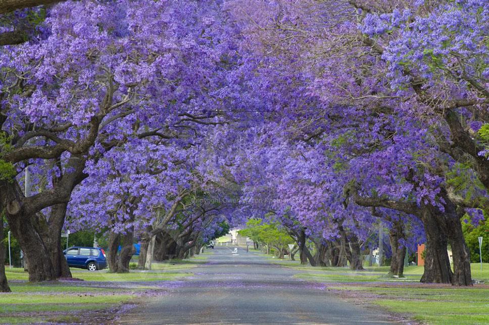 nswaustralia