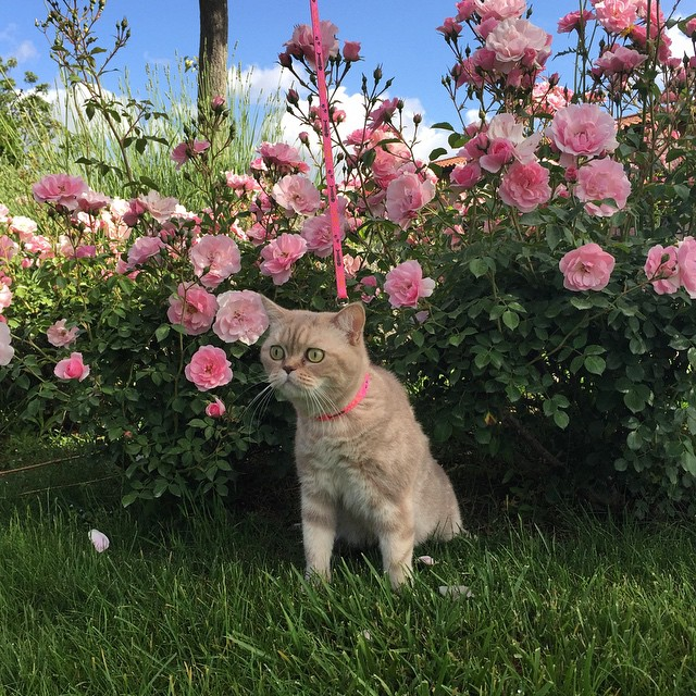 daisyscottishcat10