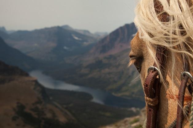 https://i1.wp.com/nomadesdigitais.com/wp-content/uploads/2015/12/cavalos-3.jpg