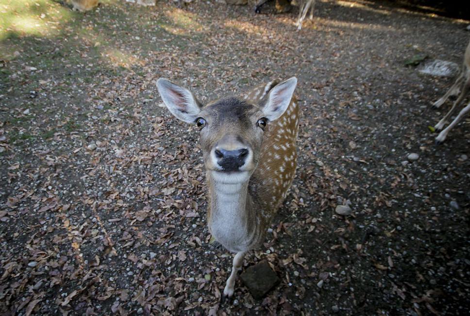 Mug-Shot-Deer-5733545d7c24b__880