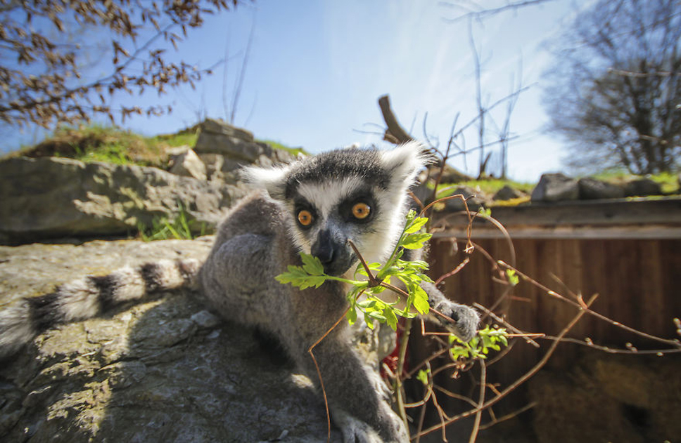 We-Photographed-Funny-Animal-Mug-Shots-All-Over-the-World-5733570b85df2__880