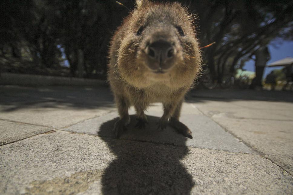 We-Photographed-Funny-Animal-Mug-Shots-All-Over-the-World-5733572c1bc51__880