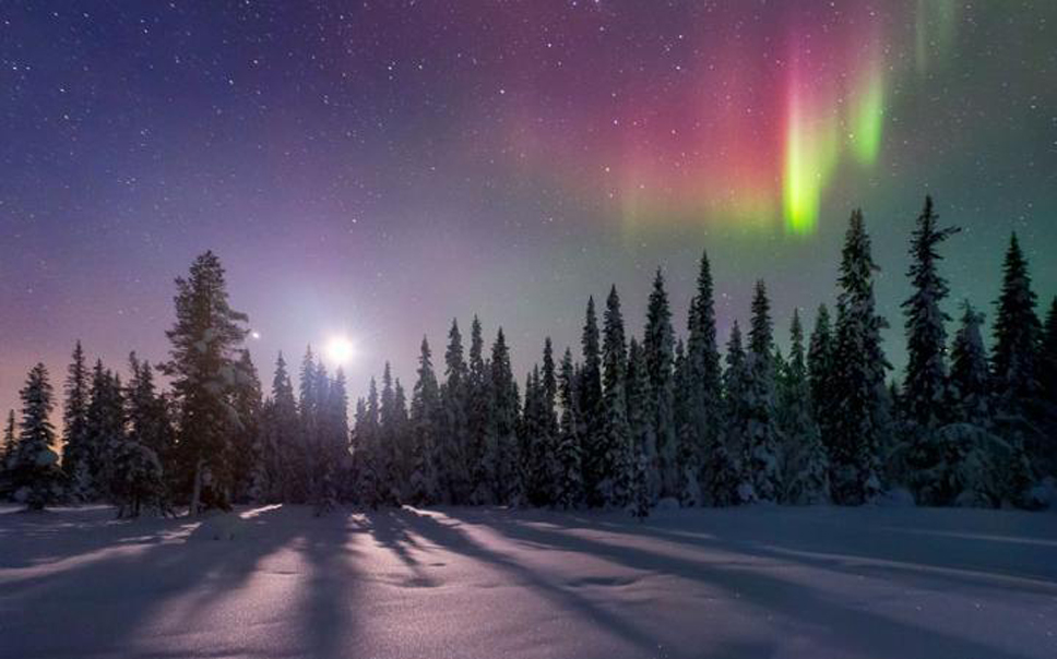 aurora-tree-shadow_2427859a-large