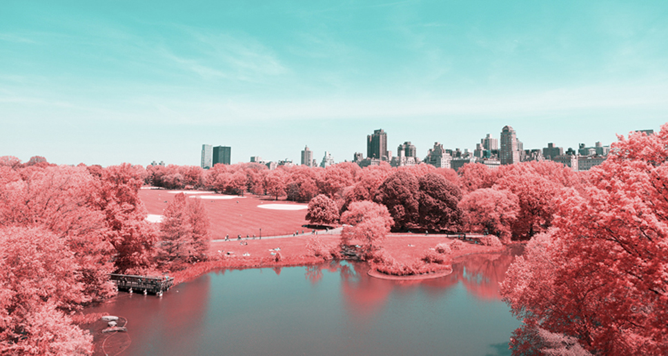 0_Central-Park-Infrared