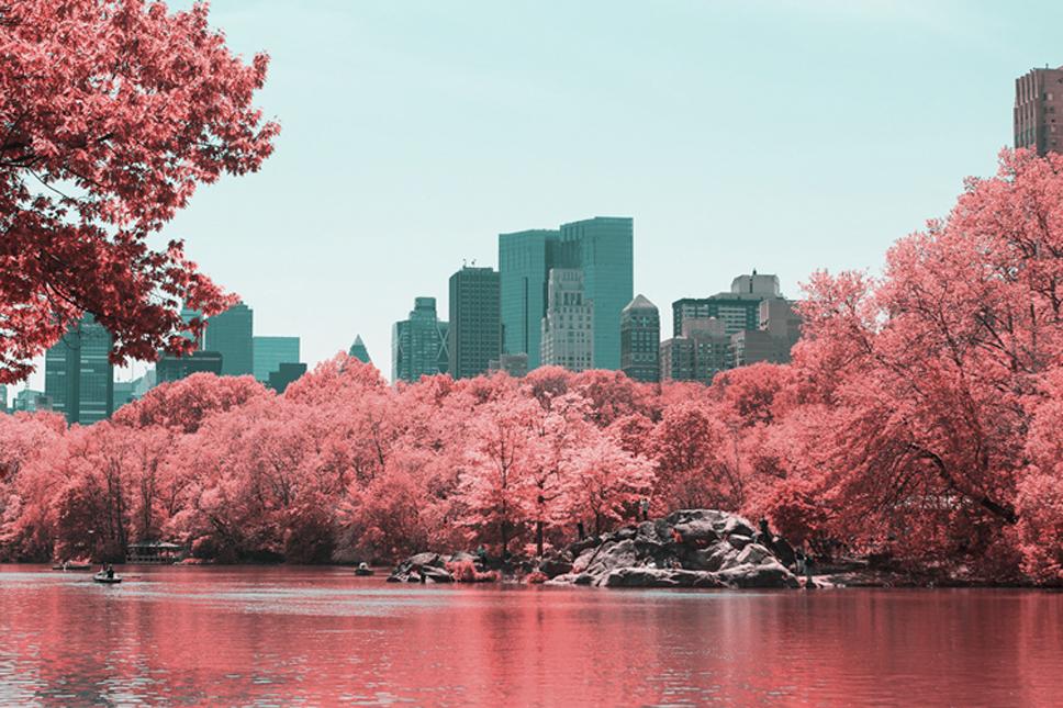 12_Central-Park-Infrared