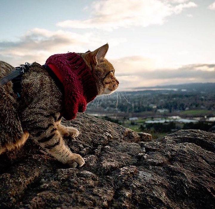 gato3
