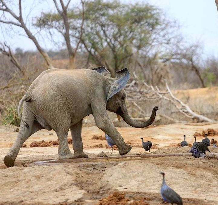 elefante10