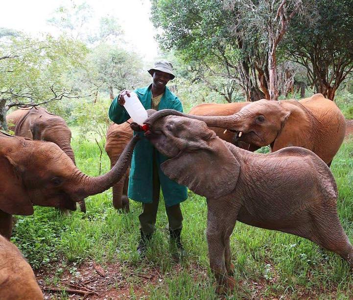 elefante9