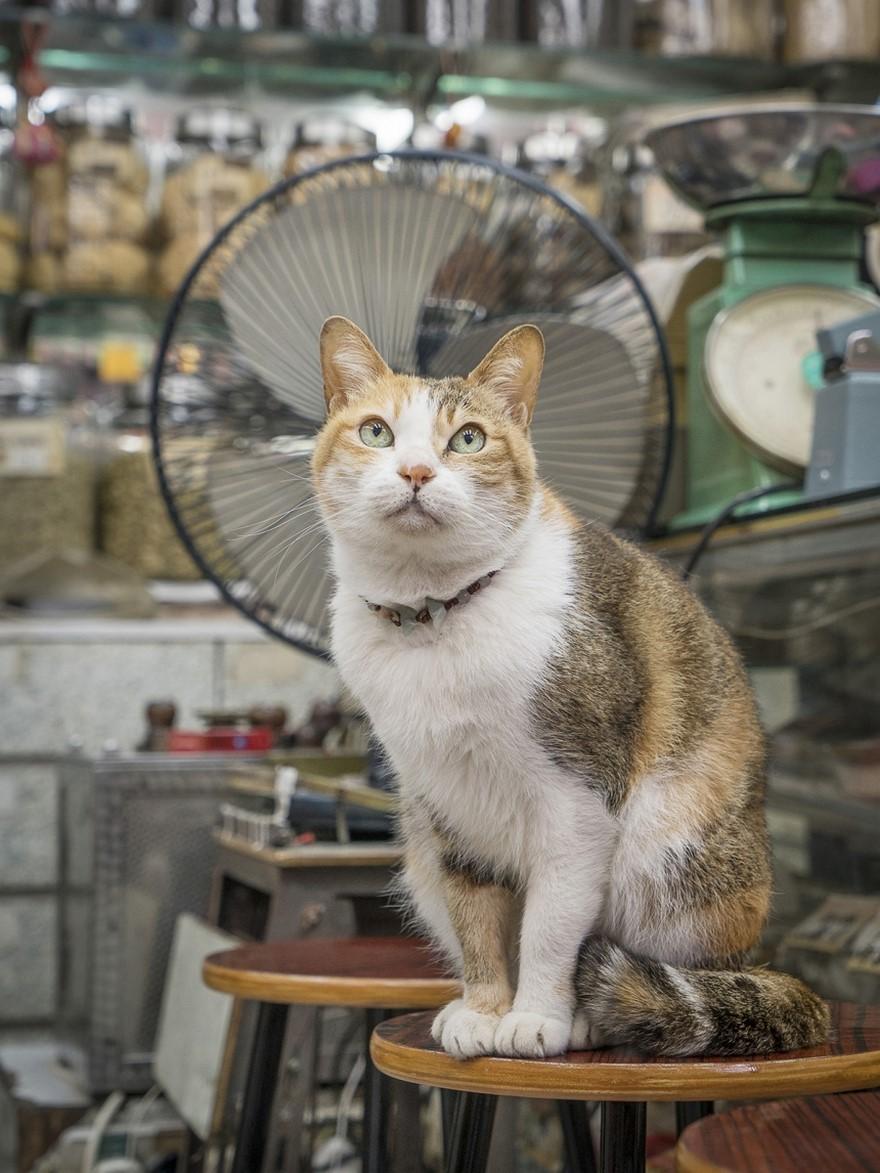 marcel-heijnen-cats-3