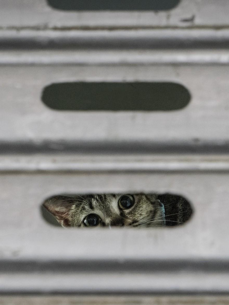 marcel-heijnen-cats-8