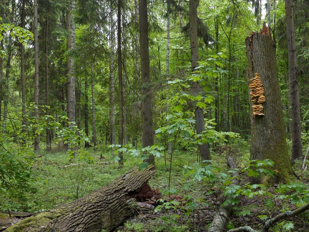 bialowieza-forest-32
