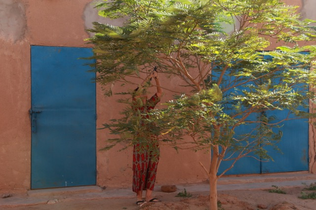 Trimming trees at Tamesna Education center.
