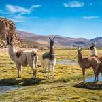 Bolivia Travel Guide – Tips, Dos, Don'ts and More