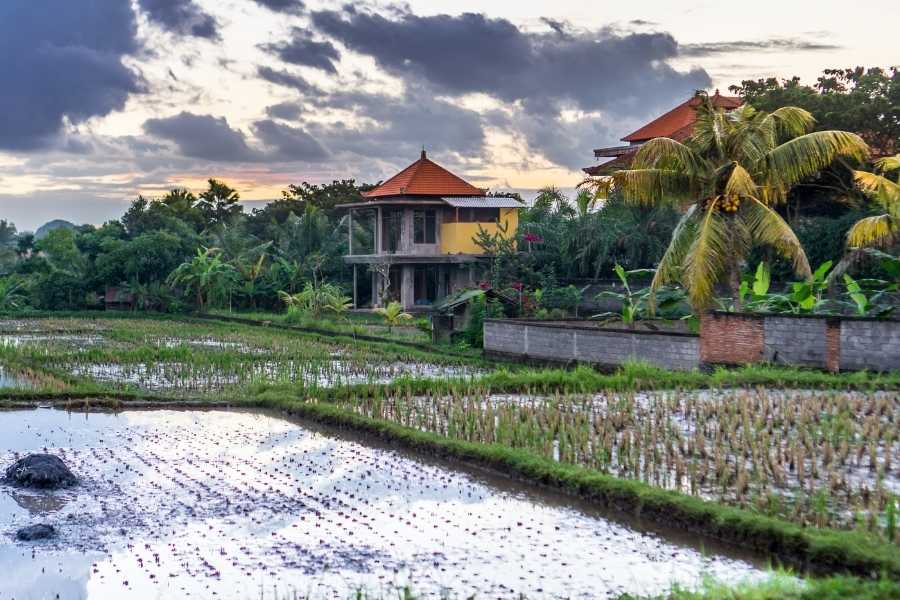 What's the Bali Destination for you? Guide to Canggu