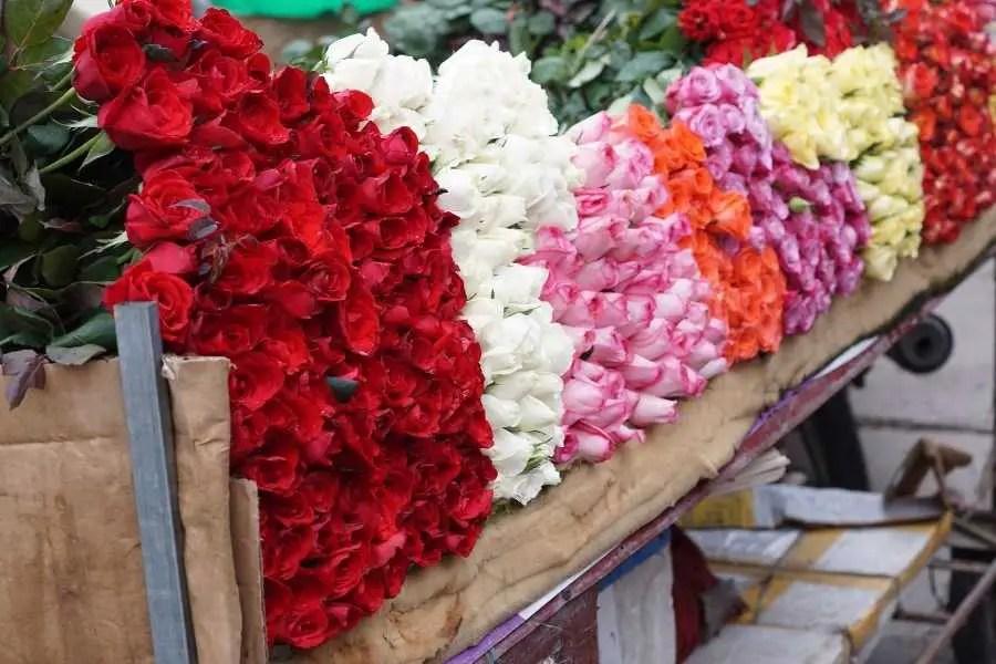 Hanoi Vietnam Asia Flowers