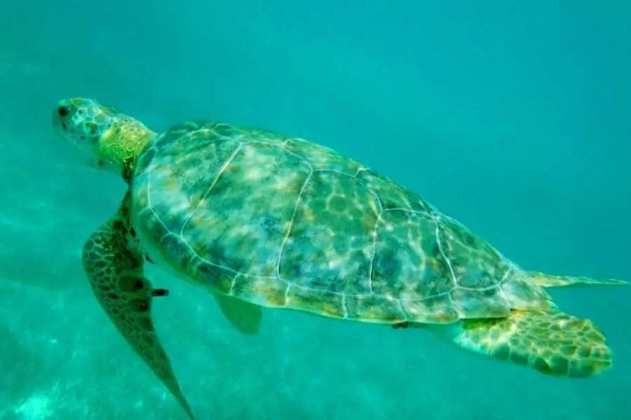 Turtle in Akumal