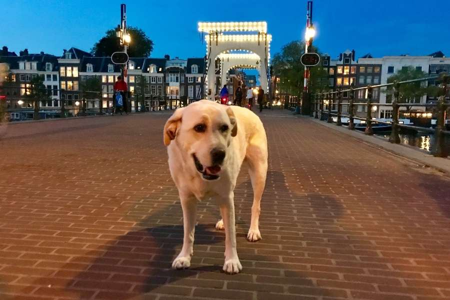 Dog Amsterdam